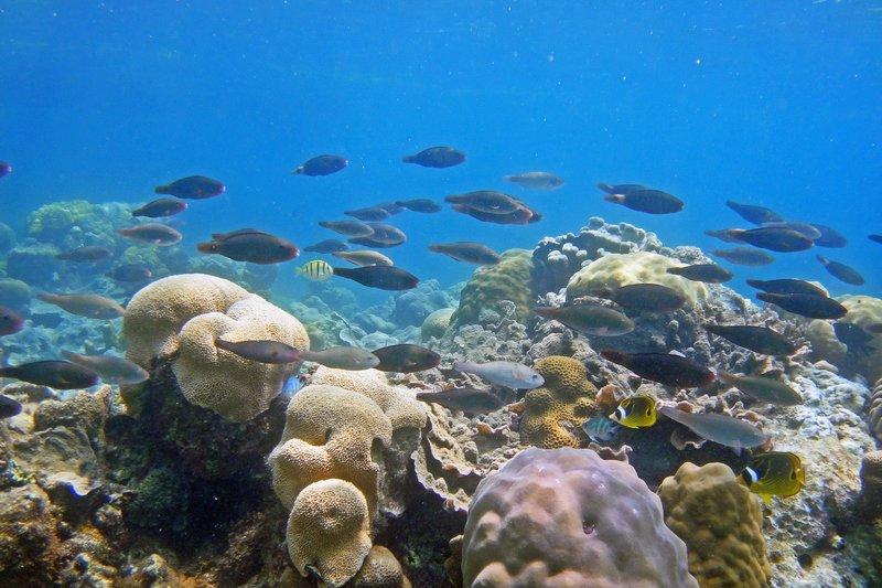 東沙國際海洋研究站,島嶼生態。(取自中山大學東沙國際海洋研究站網站)