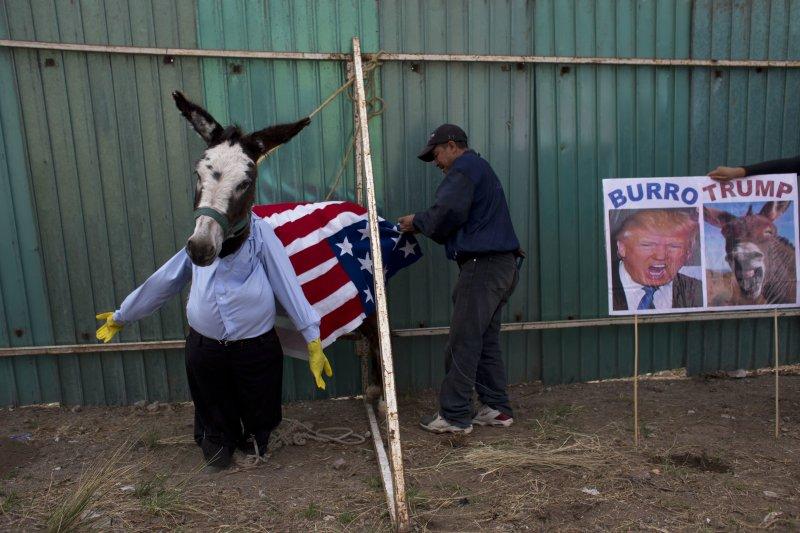 墨西哥農夫將驢子裝扮成川普。(美聯社)