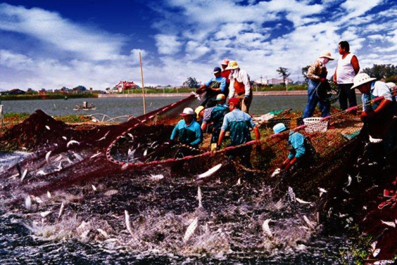大家多多少少都吃過虱目魚,但你知道虱目魚之於台灣的意義嗎?(圖/小興 蠟筆@flickr)