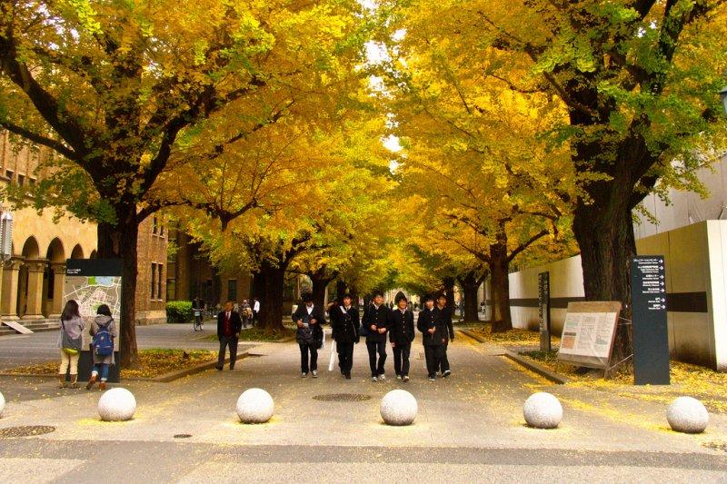 日本大學總能做出創新之舉,就連這些歷史悠久的名門學校也不例外(圖/Strelka Institute for Media, Architecture and Design@flickr)
