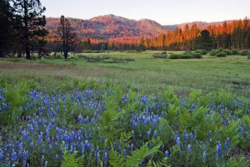 美國羅賓和南西.韋恩萊特(Robin and Nancy Wainwright)夫婦將自家土地捐給優勝美地國家公園(Yosemite National Park) (AP)