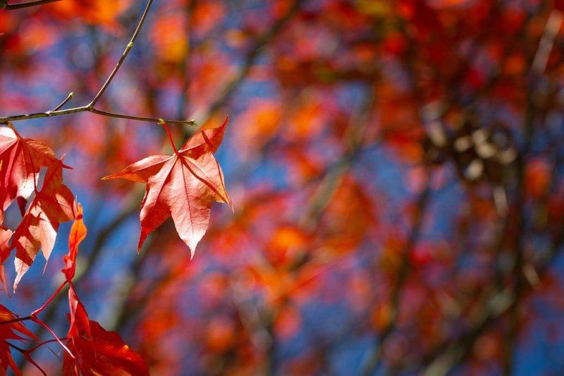 把握秋季,快到北海道賞楓吧!(圖/jasonkao73@flickr)