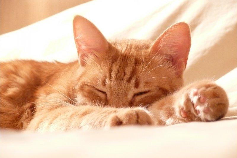 補腎 陰虛食物 - 睡前運動再來杯熱牛奶,真能讓你一夜好眠嗎?心理權威這樣說