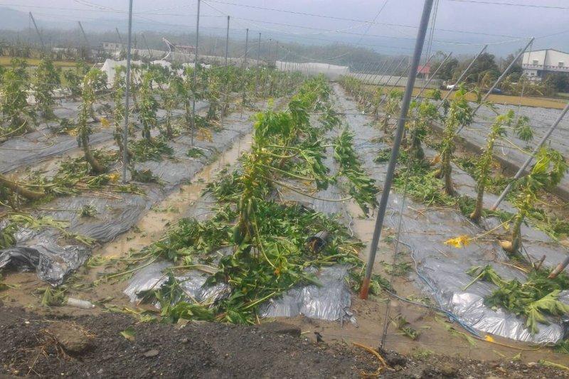 因尼伯特、莫蘭蒂及梅姬颱風接連襲擊,對農業造成更甚於往年,農委會宣布提前實施,將受災溫網室重建的補助比例由原來的3分之1,提升為2分之1。圖為梅姬颱風高雄農業災損狀況。(資料照,高雄市政府提供)