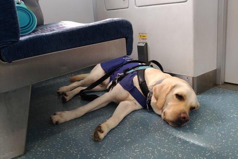 視障旅客帶導盲犬搭車,台鐵人員一路熱心相助。(資料照,取自臉書)