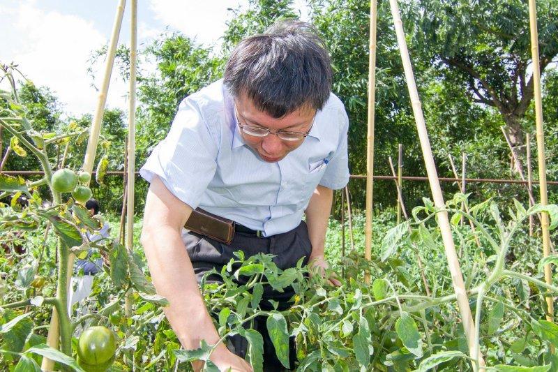 台北市田園城市計畫於去年推出,過程中卻頻傳菜園偷竊事件。(柯文哲【柯P新政】市政白皮書網站提供)