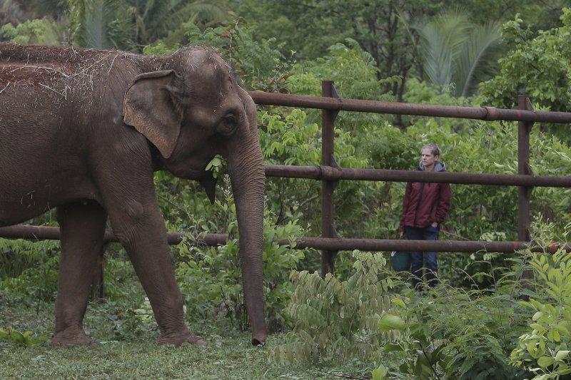 巴西的「大象庇護所」也是南美洲第一個收容年老大象的場所。(AP)