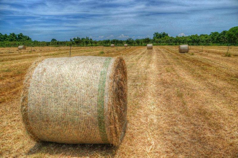 環保團體16日發表聲明呼籲,國發會切勿再將台糖視為土地提款機。(資料照,台糖沙崙農場臉書)