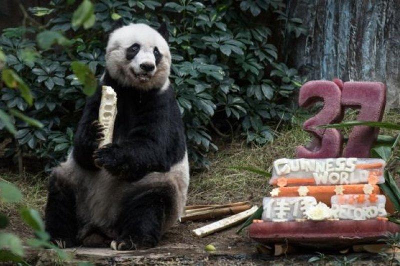 海洋公園去年為佳佳慶祝37歲生日。(圖取自BBC中文網)