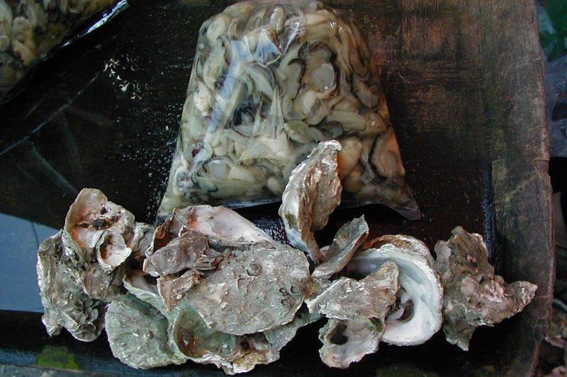 台灣牡蠣。(取自彰化縣政府農業處網站)