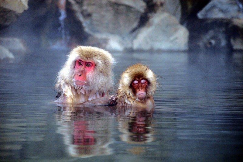 喜歡露天風呂可不只有人類而已!(圖/Chi Tranter@flickr)