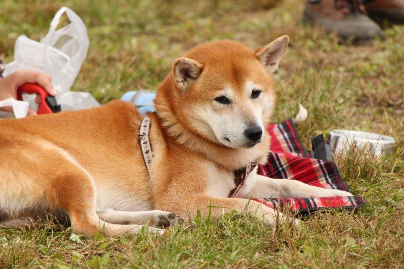 西班牙建立狗狗DNA資料庫,隨意大小便的話,主人將受罰。(圖/terrykimura@flickr)
