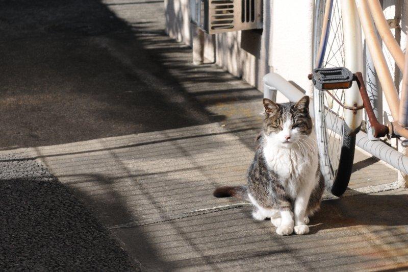 台北市竟出現訓練狗去殺貓的惡人,台北市政府允諾嚴辦。(圖/Hisashi@flickr)