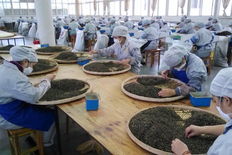 期待「認證茶聯」的成立能帶給芳村市場新的產銷秩序。(圖/許怡先提供)