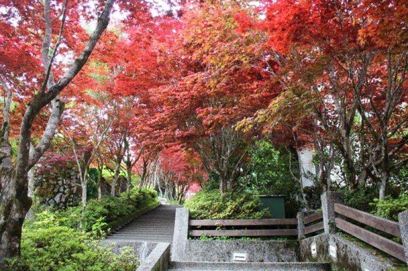 宜蘭太平山楓紅景致。(圖/Funtime提供)