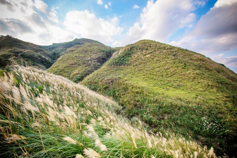 草嶺古道的芒草美景,不要錯過啊!(圖/中岑 范姜@flickr)