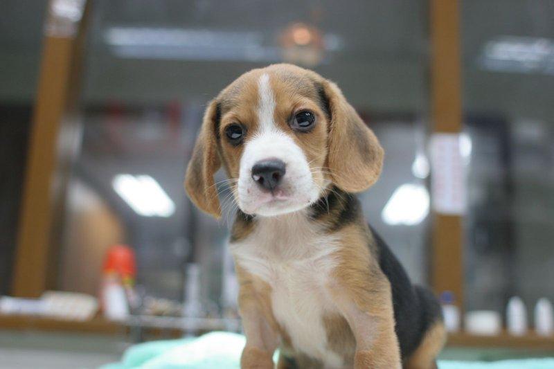 可憐的小狗,竟遭主人狠心從五樓丟下…(圖/新北市政府農業局動物保護防疫處提供)