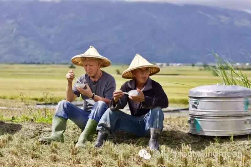 金燦燦的稻田裡,熱火朝天,戴著斗笠的蔣勳和揮鐮的農人一起割稻一起吃飯,贊土地與倫理的關係,簡直要讓人放歌一曲「在希望的田野上」。(作者提供)