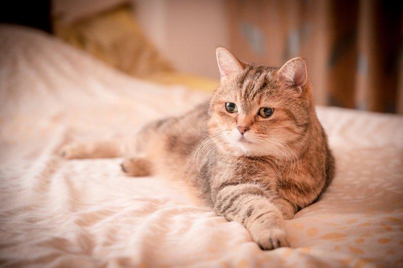 懷孕可以養寵物嗎?婦產科醫師說話了…(圖/sam651030@pixabay)