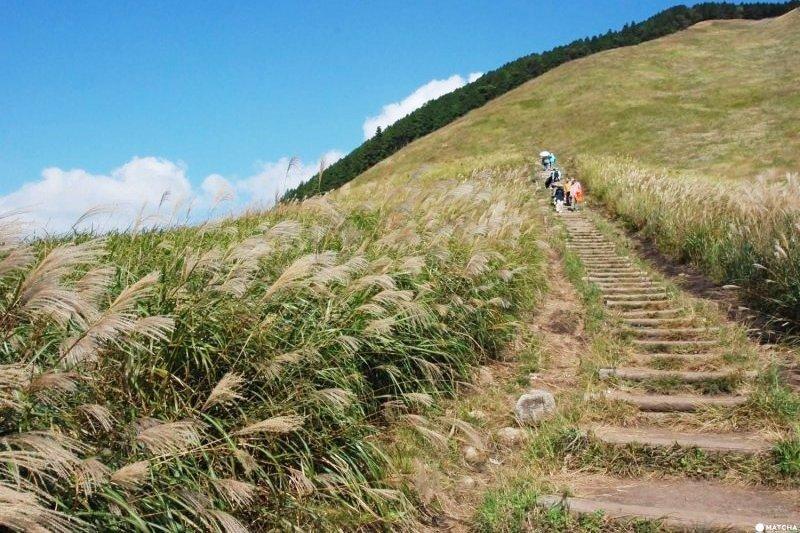 去奈良旅行,除了餵鹿之外,也可以來曾爾高原感受晴空萬里、一大片芒草搖曳在身邊的大自然美景!(圖/MATCHA提供)