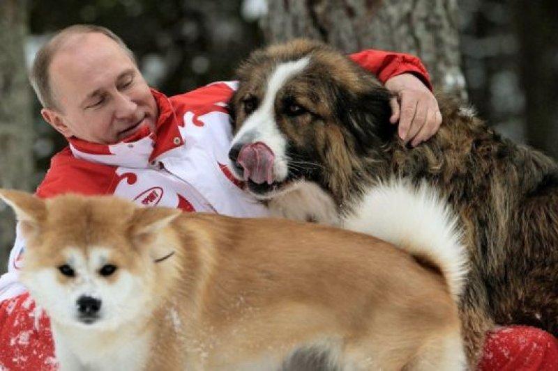 日本送給俄羅斯總統普京的秋田犬「Yume」(左)和保加利亞總理贈送的保加利亞牧羊犬「Buffy」(右)(BBC中文網)