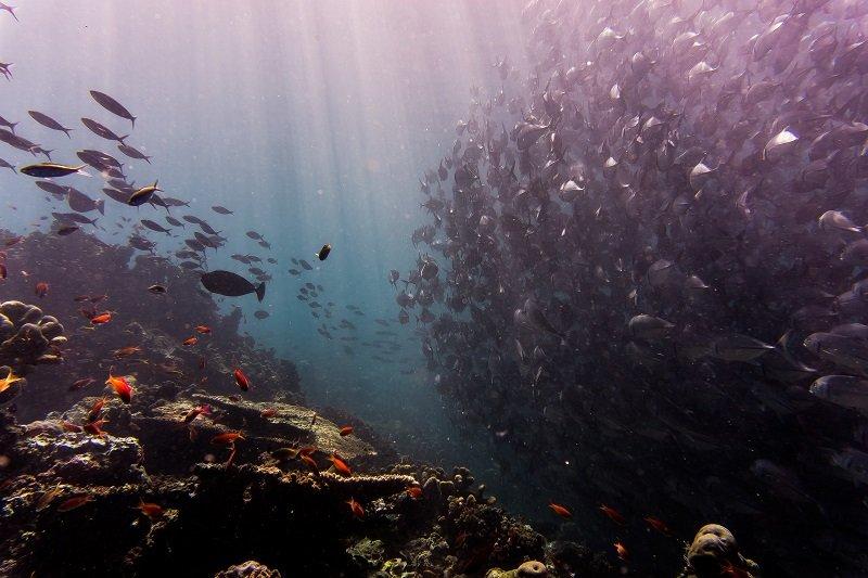 環境守護,千萬不要有「不差我一個」的想法,從小地方做起。(圖/Johnny Chen@Unsplash)