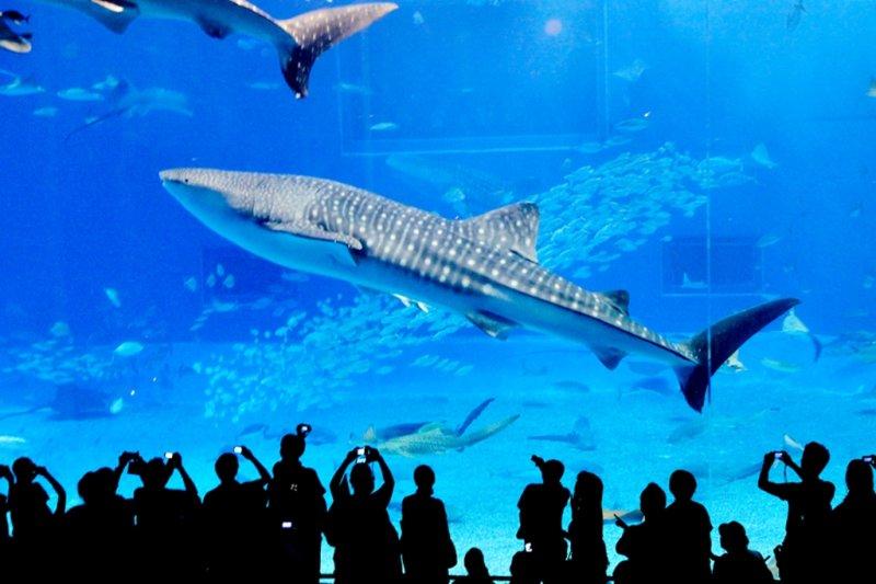 小時候去過水族館,當時只知道水族館有好多魚、好漂亮,現在知道,其實這是一種傷害動物的行為...(圖/Makoto Okuda@flickr)