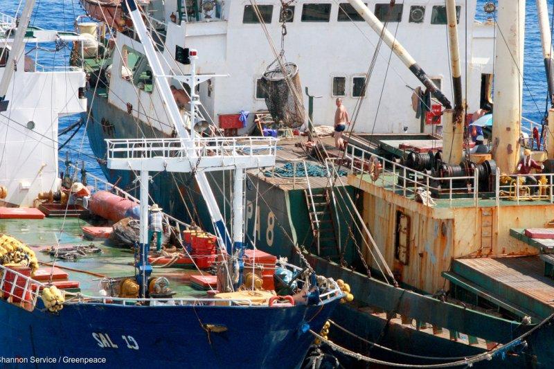 2012年在太平洋公海上,菲律賓漁船非法轉載鮪魚到柬埔寨冷凍漁船。(綠色和平提供)