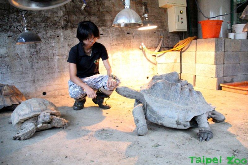 室內有保溫燈維持烏龜的體溫,以免晚上感冒流鼻水(台北市立 動物園)