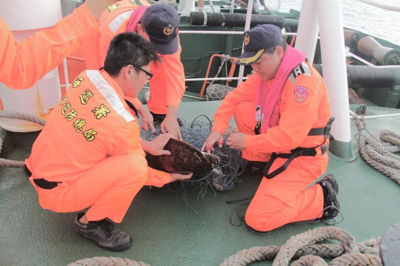 「巡護七號」船執行「碧海191號」時,於20日發現遭網纏繞的海龜。(海巡署海洋巡防總局提供)