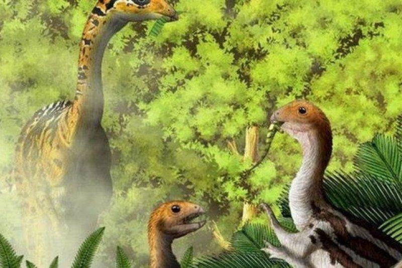 泥潭龍的成龍和幼龍差點被分成兩種不同的恐龍。(圖取自BBC中文網)