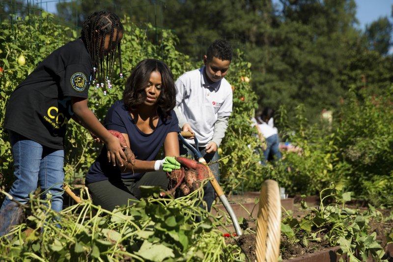 為對抗兒童肥胖問題,蜜雪兒在白宮建菜園,還邀請孩童一同收割。(美聯社)