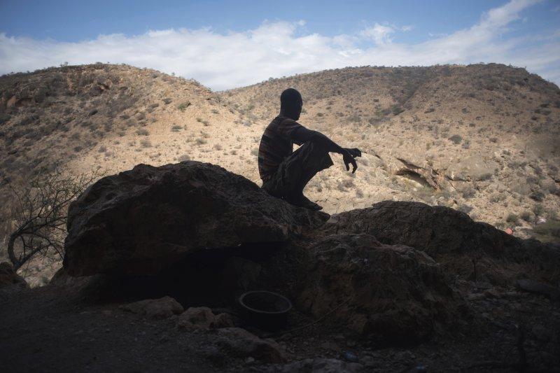 東非索馬利蘭,全世界最後一處野生原始的「乳香木」(frankincense)森林。(AP)