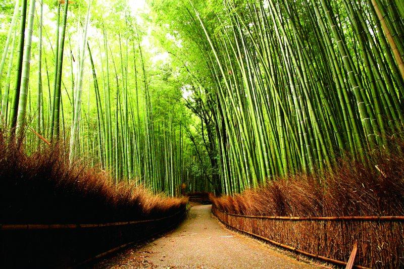 在恬靜的竹林山野中,與歷史古蹟、古剎隱寺相遇,凝結最美的時刻。(圖/健行文化提供)