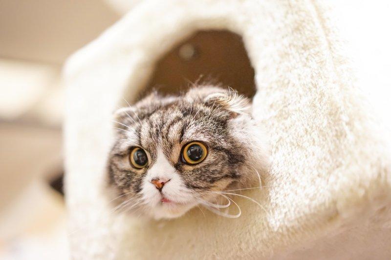 貓咪發出「咕嚕咕嚕」的聲音,究竟是什麼意思?(圖/Pakutaso)
