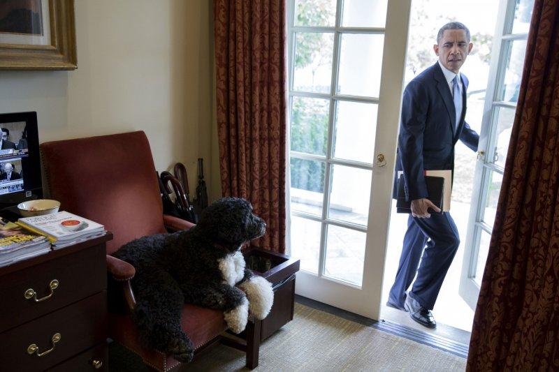 身為第一狗狗的葡萄亞水犬「小波」(Bo),趁主人不在時霸佔總統大位。牠在2009年入主白宮,2013年另一隻同品種的「桑妮」(Sunny)也加入戰局。(取自White House)