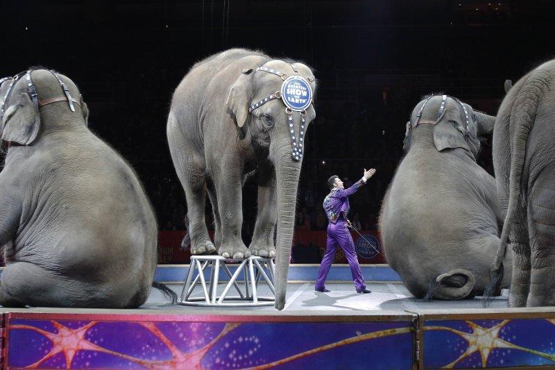 世界三大馬戲團之一的「玲玲馬戲團」(Ringling Bros. and Barnum & Bailey Circus)將在成立146年之後畫下句點(AP)