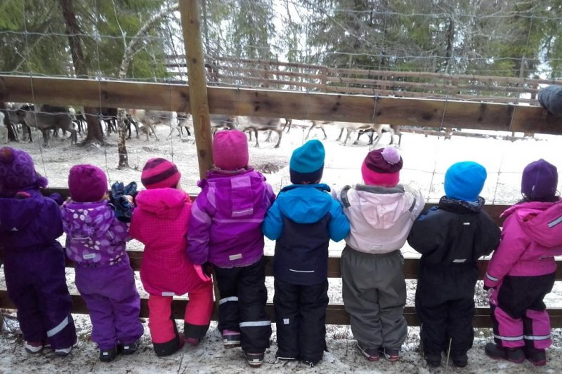 挪威一間幼稚園帶幼童參觀屠宰馴鹿。(Granstubben Barnehage幼稚園臉書)