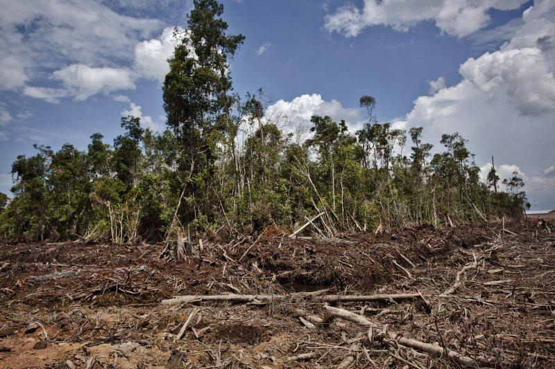 在加里曼丹西部,由Bumitama Agri子公司PT Ladang Sawit Mas的油棕經營特許區裡森林遭皆伐的情景,匯豐集團就被指控為該公司找尋資金來源,被指稱為毀林幫兇。(綠色和平組織提供)