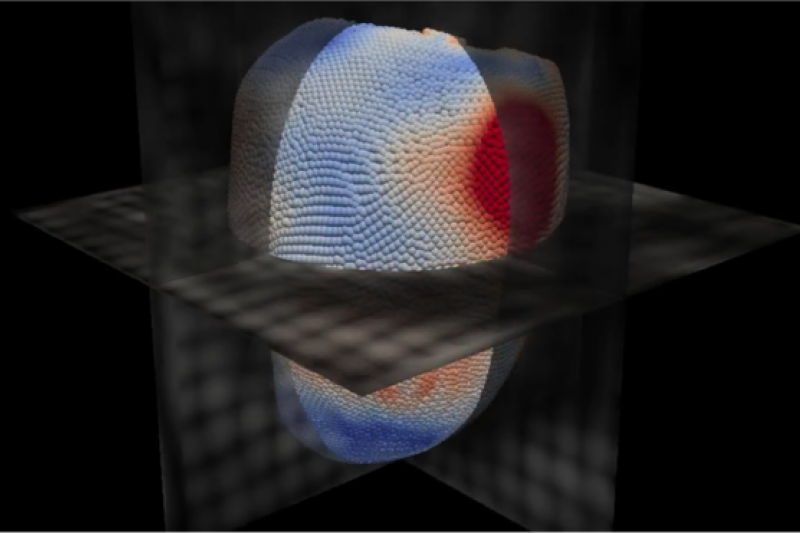此人工智慧軟體通過一個虛擬的心臟來預測死亡危險。(圖/BBC中文網)
