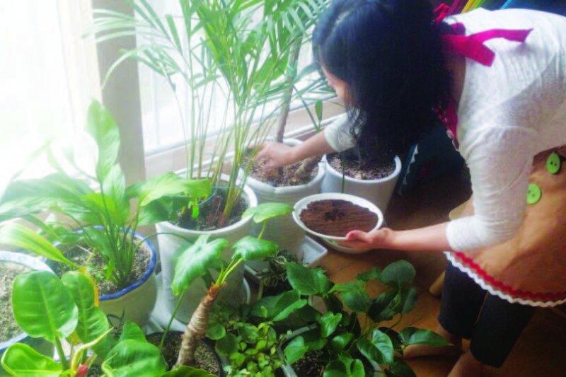 使用咖啡渣做為盆栽用培養土(圖/尖端出版提供)