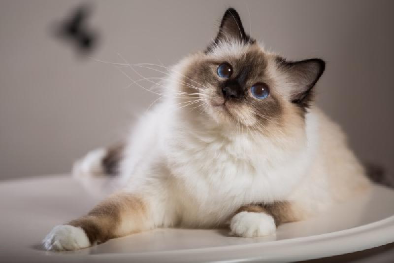 為什麼貓都叫不來?真的貓比較高傲嗎?(圖/寵毛網)