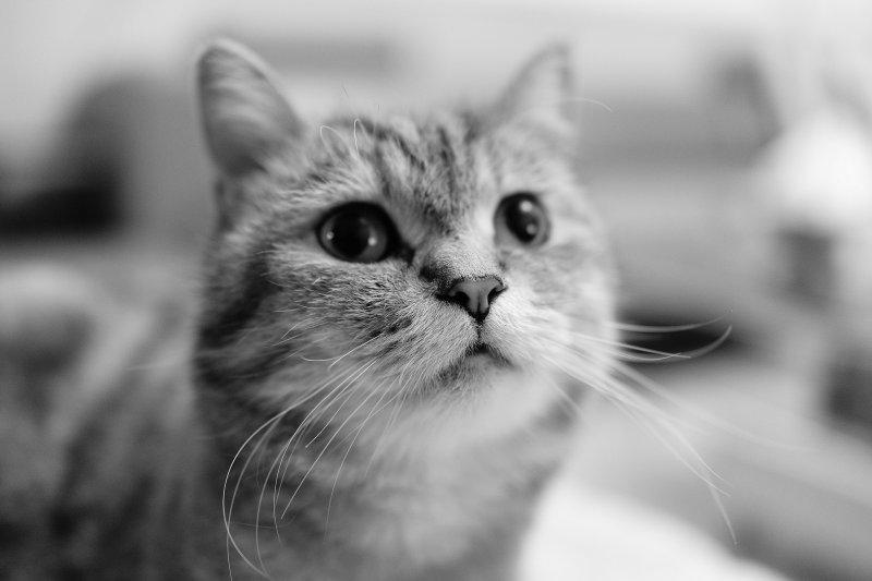 日本科學家說,在若干記憶測試中,貓咪的表現和狗狗一樣好,意味貓咪的聰明程度可能不輸狗狗。(圖取自pixabay圖庫)