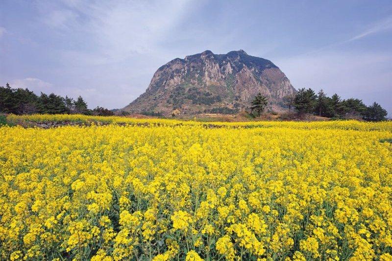 「濟州島」以「風多、石頭多、女人多」而聞名,趁228連假徜徉在明媚的春光裡吧!(圖/Republic of Korea@Flickr)