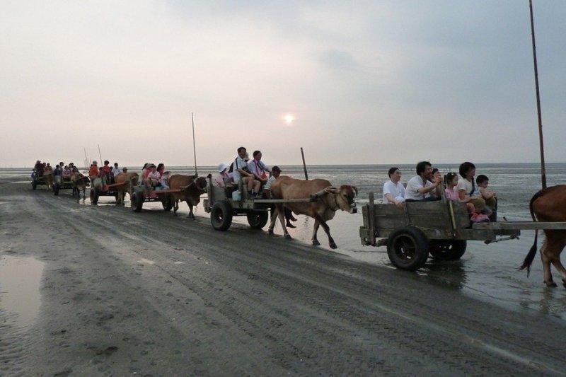 彰化海岸擁有全台灣最大的泥質潮間帶,圖為牛車採集牡蠣的特有產業文化。(彰化環保聯盟提供)
