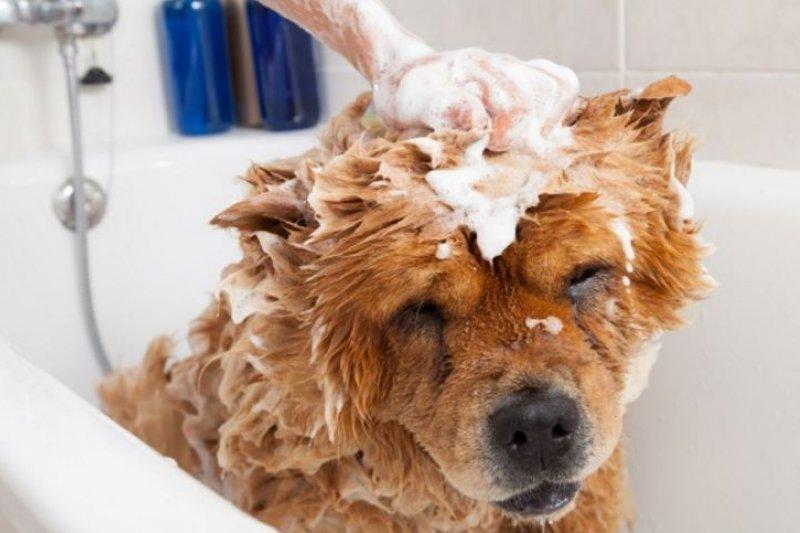 一起把毛小孩的洗澡時間變成開心的事吧!(圖/寵毛網)