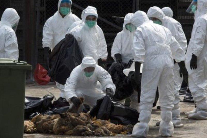 香港當局在2014年為防止H7N9禽流感疫情擴散宰殺了20,000多隻家禽。(圖取自BBC中文網)