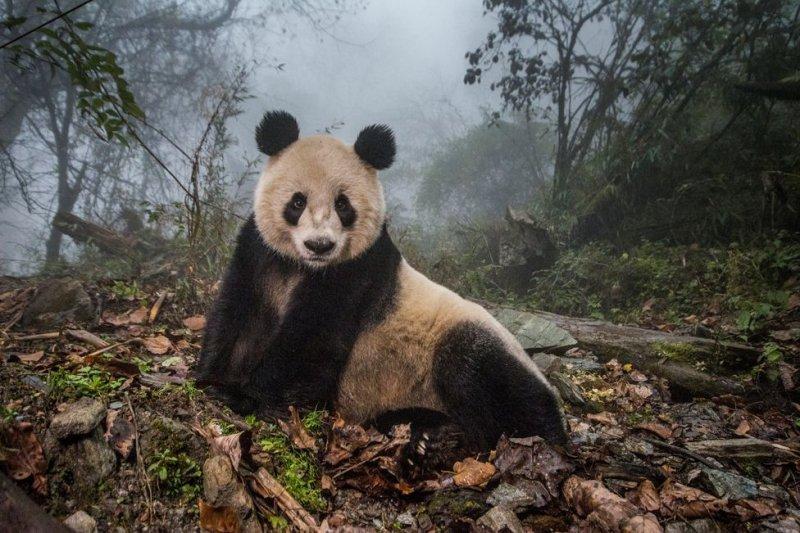 世界新聞攝影大賽(BBC中文網)