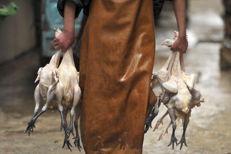 中國近來出現H7N9禽流感禽傳人疫情(AP)