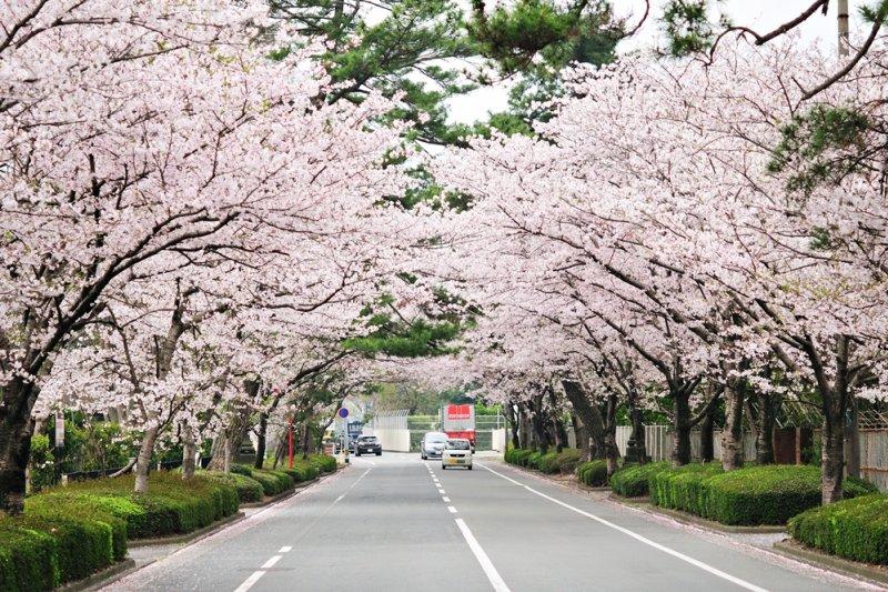 在日本讀大學,究竟是幸運還是一場惡夢?(示意圖/gtknj@flickr)